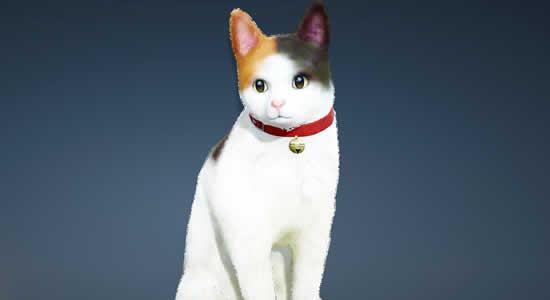 黒い砂漠、首元に鈴を付けた新ペット「三毛猫」登場!「ヴォルクスの叫び」イベント開催!