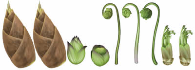 キャラフレ_春の山菜