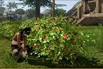 アーキエイジ_植物を育てる